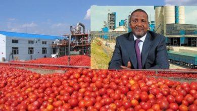 Photo de Le groupe Dangote  lance la plus grande usine de transformation de tomates en Afrique !